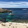 ミニホリデー♪ロットネスト島に行ってきました!その3