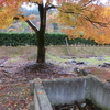 一乗谷 朝倉遺跡の紅葉の現在の画像と広範囲すぎる遺跡が凄すぎた!