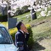 FUJIFILM X-H1 で切り撮る桜の写真。【jpeg撮って出し】