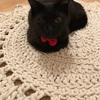 わたくし魔女の花やっこ、コッチは黒猫のここ!おじゃまさせていただきます!