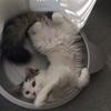 猫それぞれの適温