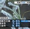 熊本・阿蘇で初氷 天草で気嵐