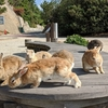 【大久野島】周回道路を回ってウサギの給食当番!