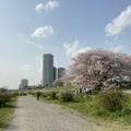 春の二子玉川〜多摩川散歩風景 2021年4月1日