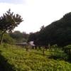 新緑の千鳥ヶ淵