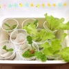 水耕栽培で作った野菜の出来栄え