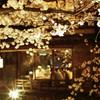祇園白川の夜桜ライトアップ2016