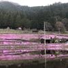 岐阜県観光大使の桜情報~明宝の明るい宝~