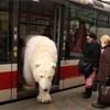 バスから降りる熊