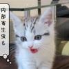 猫の病気 ~内部寄生虫~