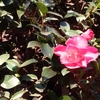 2月3日は節分、4日は立春。陰暦での一年の区切りの日。