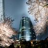 2017年 撮りに行った桜をまとめてみた【都内編】