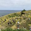9月19日~22日にかけて「白米千枚田」で稲刈りが行われました