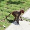 子どもの頃、私は猿だったのかもしれない
