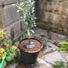 花柚子植え付け