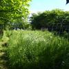 草ボーボーのファーム、なんとか夏野菜の植え付け・・・。