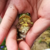 カエルのかわいい写真が撮れてしまいました