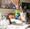 保護猫を撮り続ける保護猫写真家: ねこたろうさんがライターとして参加しています