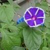 5-96   愛すべき花たち〜2020年は紫から…〜