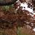紅葉の季節ですね ~2020年11月 柏の葉公園~