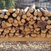 栗の木をもらったので薪としてどうなのか調べてみました