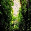 高知県立牧野植物園はボタニカルワンダーランドだった!