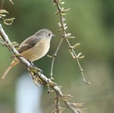 スガの鳥文庫
