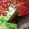 紅葉の撮り方をまとめてみました。【構図編】