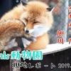 【過去レポ#3】あの冬に帰りたい。旭山動物園現地レポート(2019/11/29)
