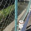 安川は、暗渠になって安川緑道公園をぬけるとやがて姿をみせてくれます。