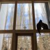 【注文住宅 猫のための家づくり】猫の幸せが僕達の幸せ。猫も快適な家を目指しました。