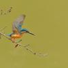 デジタル一眼レフカメラで野鳥撮影に挑戦してみた その2 カメラと散歩