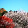 三国山山麓の紅葉と四季桜