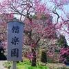 梅薫る 偕楽園 に行ってみよう。(水戸市)