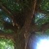 木の語ること