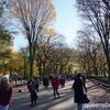 【海外生活・日常】紅葉のセントラル・パーク、ザ・モール付近を散策!秋晴れの下ザ・レイクで初ボート体験!
