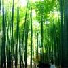 湘南・鎌倉1人女子旅!【雑貨にグルメにパワースポット巡り】