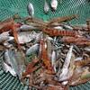 沖縄のイジャイ(イザリ)漁に必要な持ち物、必須が「3つ」あります!