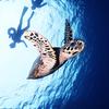 ♪慶良間と青の洞窟で贅沢アドバンス♪〜沖縄ダイビングPADIアドバンス〜