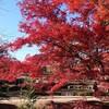 ヒルクライムと紅葉の組み合わせ!曽木公園で紅葉狩り【東海ロードバイク巡り】
