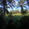 バリ島の朝🏝