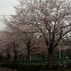 【VFK】2017年Jリーグ第6節 vs川崎(等々力)