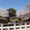一の坂川:桜②