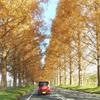 滋賀県高島市のインスタ映えスポット「メタセコイア並木」に行ってきました