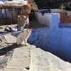 シャウエンのATMで現金確保。おすすめレストランとアボカドパフェ(世界の猫探し209~227匹目)