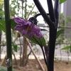[今日の園芸]雅な花が咲きましたよ。
