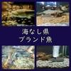 【まとめ】海なし県にもブランド魚!内陸県が取り組む新名物。
