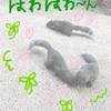 町田リス園にいってきた