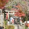 熊野若王子神社の紅葉、見頃や現在の状況。