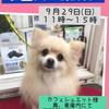 「9/29 譲渡会のお知らせ」のお知らせ